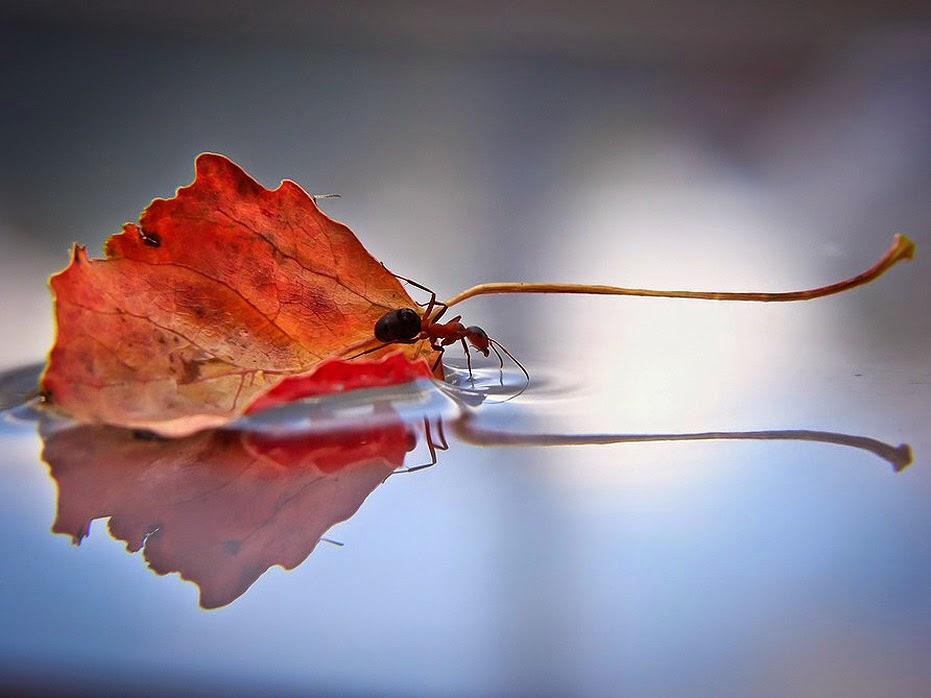 Однажды подполз муравей к большой луже, чтобы напиться