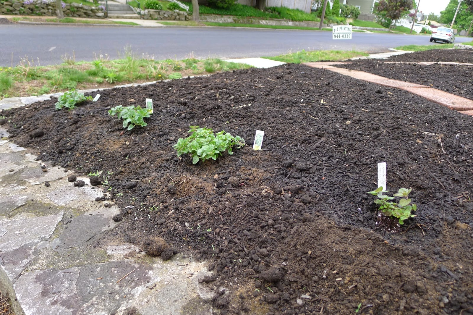 edible landscaping, oregano, soil erosion