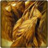 Cara ampuh mengurangi stres dengan gandum