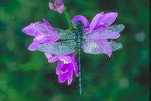 In Remembrance of 6 Little Dragonflies