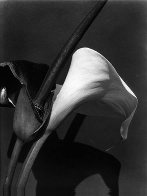 Black and White Lilies, após anos 1920