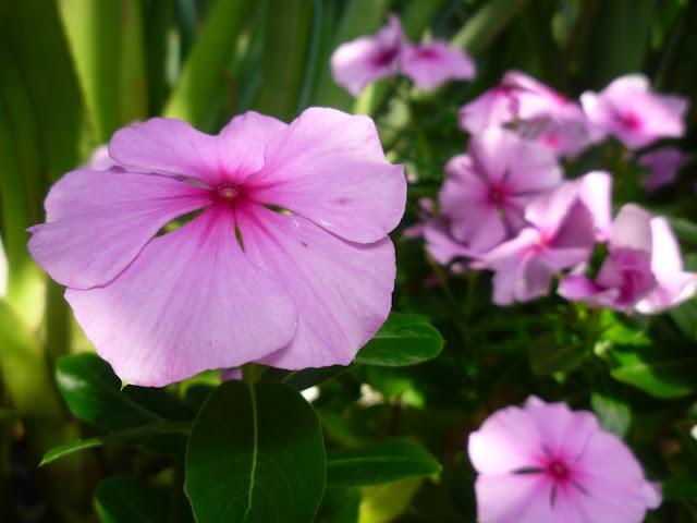 pink flowers via lovebirds vintage