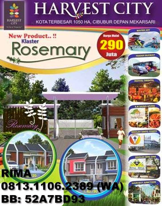 Cluster Rosemary