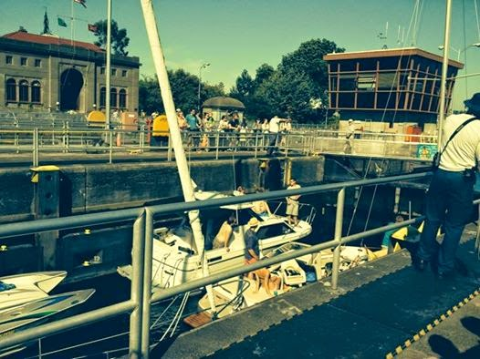 Rosy the reviewer top ten things to do this summer and for Ballard locks fish ladder