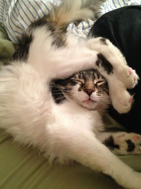 Сумасшедшие коты, фото 18