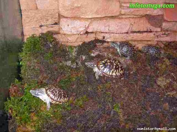 Un zoo en casa instalaciones para terrapene for Caracoles de jardin