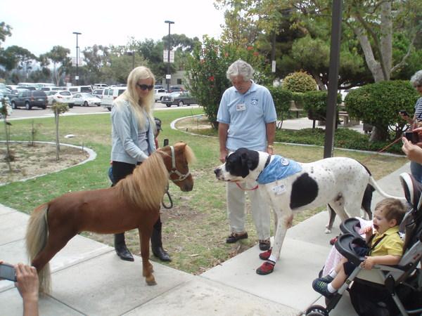 Great Dane vs English Mastiff