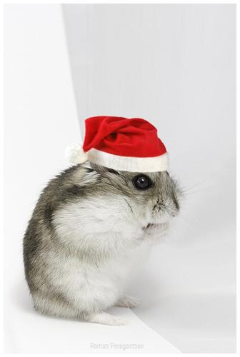 Cute christmas animals - photo#25
