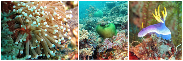 Pulau Babua - Keindahan Wisata Halmahera Barat