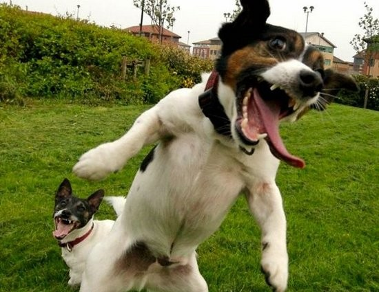 funny animal pics. Funny Laughing Animals