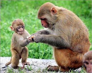 إكتشاف وسيلة جديدة لمنع الحمل طورت وجربت على القردة