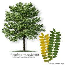 7 Pohon dengan Batang Duri Paling Berbahaya di Dunia - raxterbloom.blogspot.com