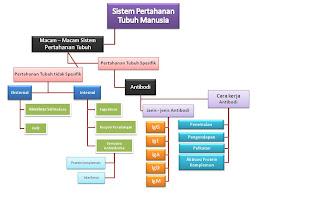 Sistem Pertahanan Tubuh Spesifik