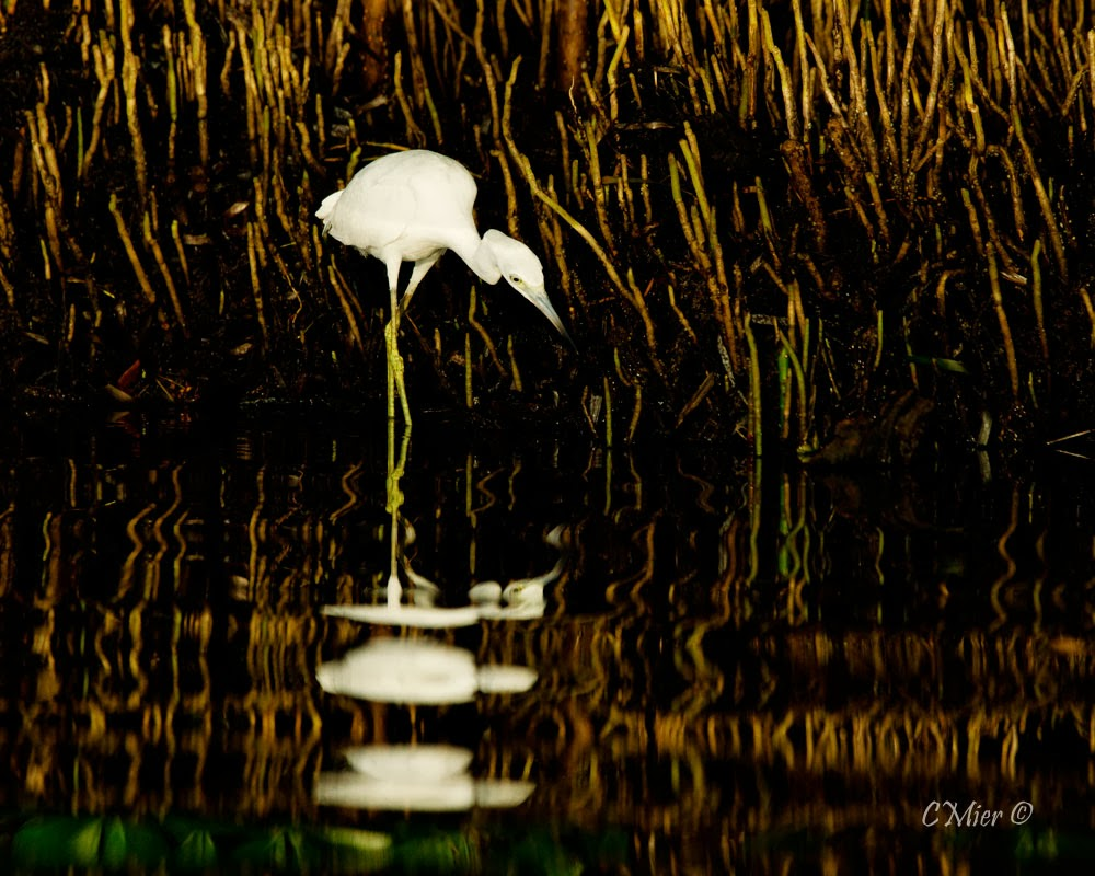 florida photography from a canoe september 2013