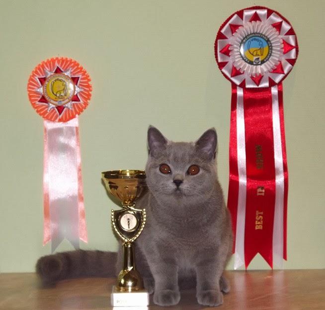Кошки  happyfenixcom