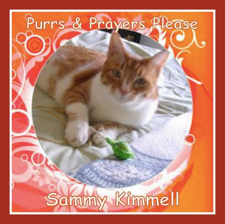 Our pal Sammy needs your purrs and prayers