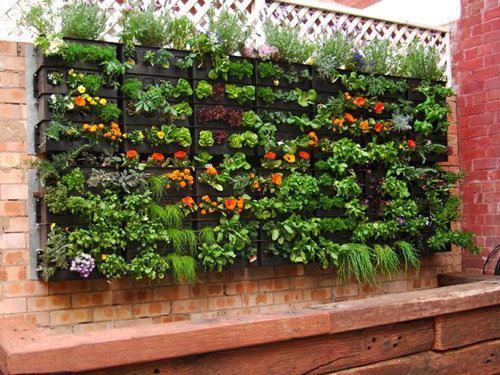 macetas especiales para jardineras verticales una inversin mas alta poco mantenimiento mano de obra calificada - Jardineras Verticales