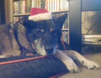 Rusty wishes you a Merry Christmas!