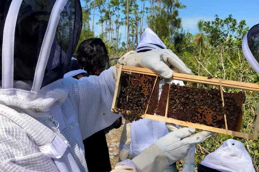 Bahama Beekeepers Hurricane Relief Fund