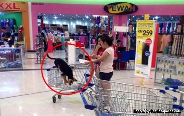 Anjing Kencing Dalam Tesco