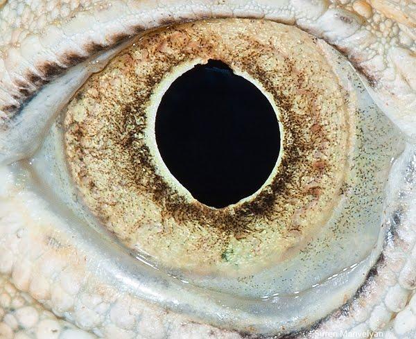 Beautiful Photos of Animal Eyes by Suren Manvelyan