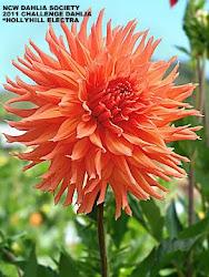 NCWDS 2011 Challenge Flower