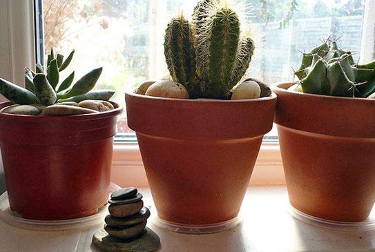 arte y jardinerÍa : los cuidados correctos de los cactus