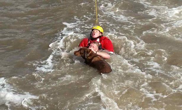 Dog Rescues Merseyside