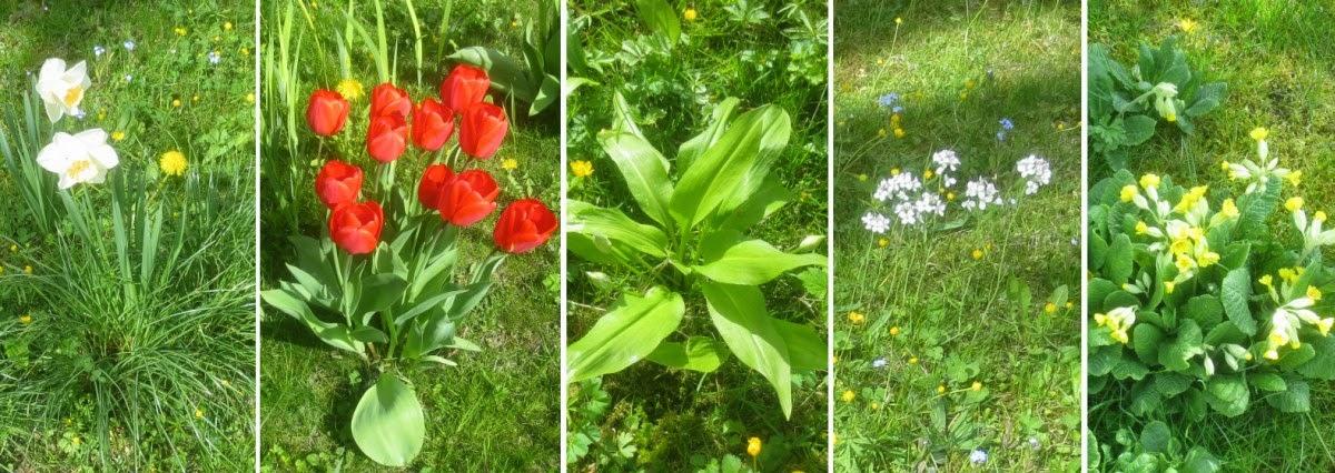 Collage Frühlingsblumen auf der Spielwiese