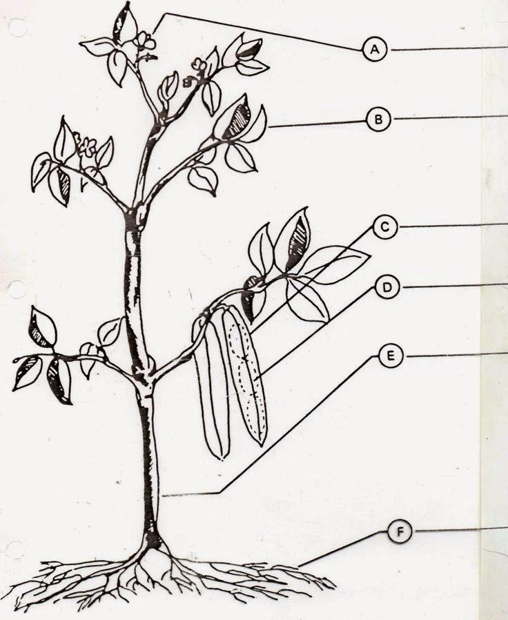 Frunzele Raspunsurile Elevilor Afisate Tabla  Completa Imaginea Plante