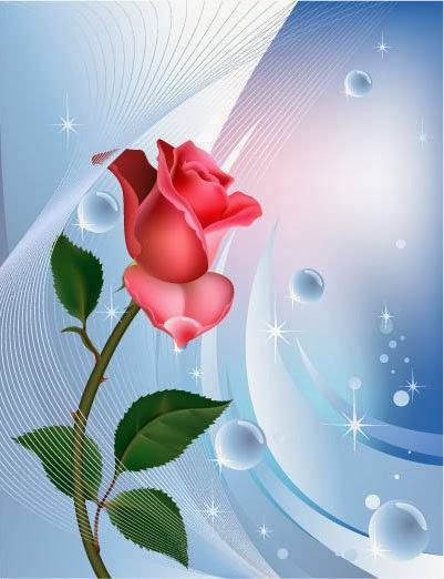 The Blushin Rose
