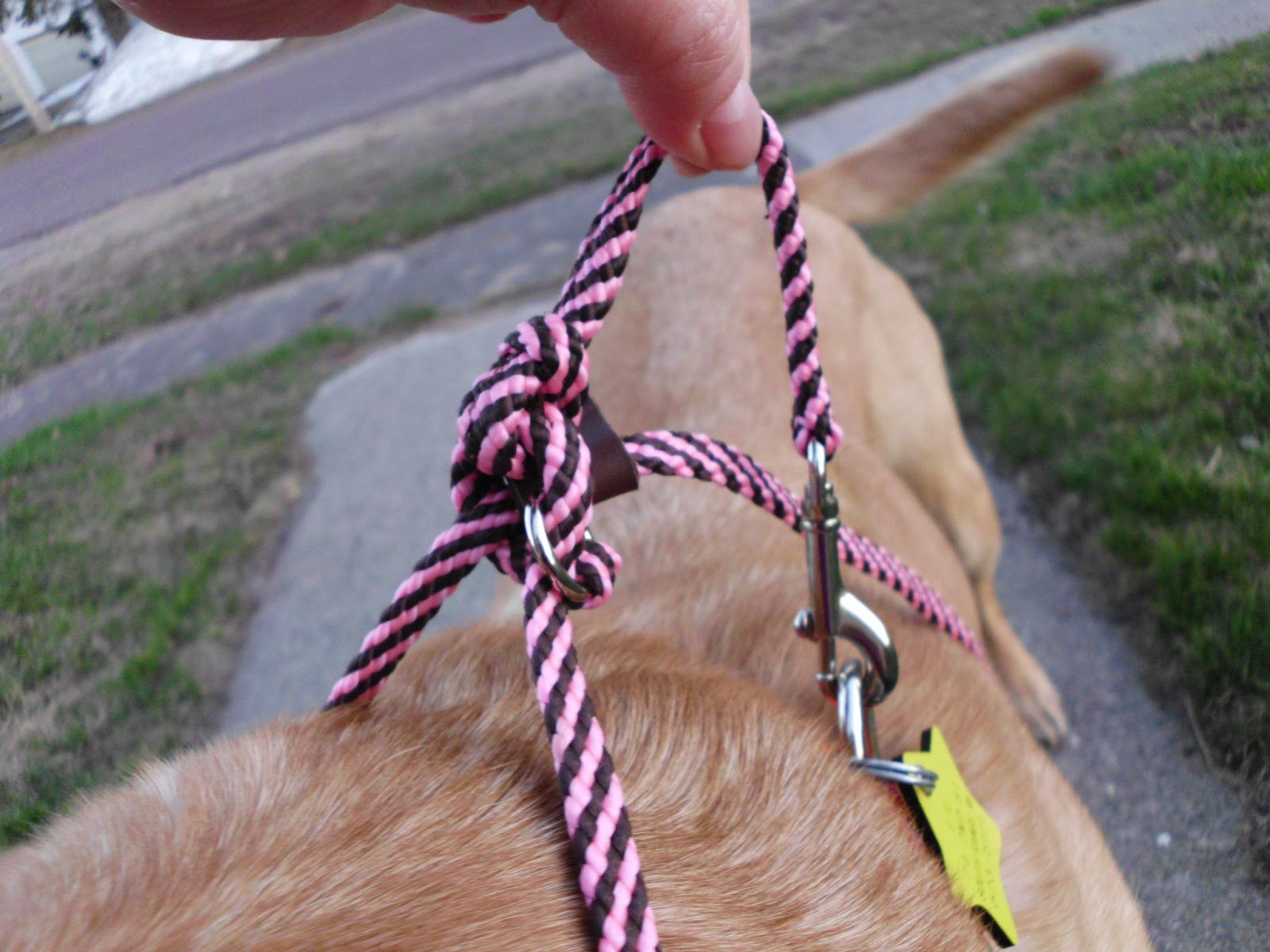 how to stop a beagle from pulling on the lead