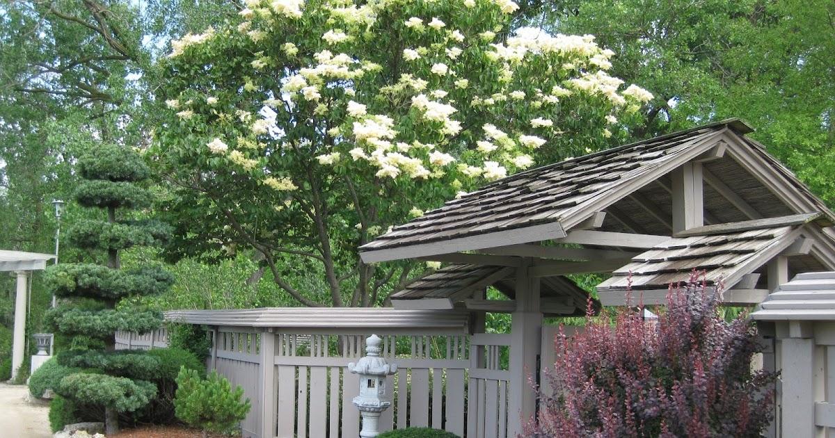 Rotary Botanical Gardens - Hort Blog: Coming Soon: LILACS!