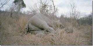 Gajah Mati