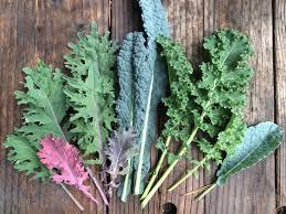 We have 4 Different Kale Varieties!