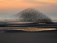 5 Bentuk Formasi Burung Terunik di Dunia
