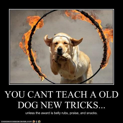 Old Dogs New Tricks Can You Feel It