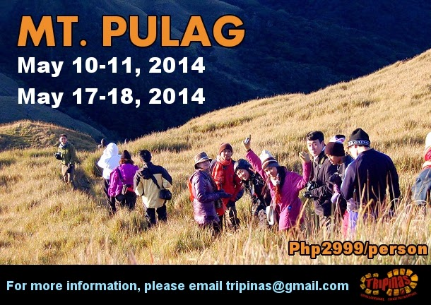 mt pulag tour