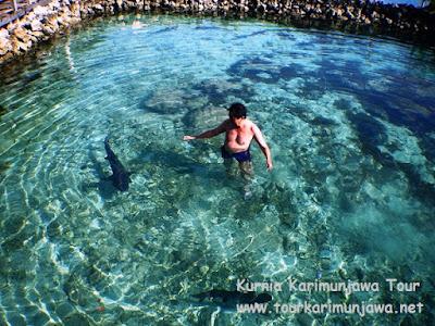 wisatawan di berenang dengan hiu di karimunjawa