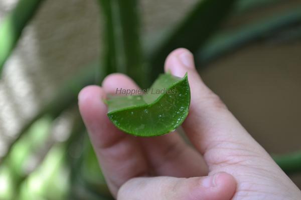 Aloe-vera-gel-+-aloe-vera-cream
