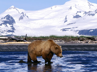 Bear Wallpapers HD