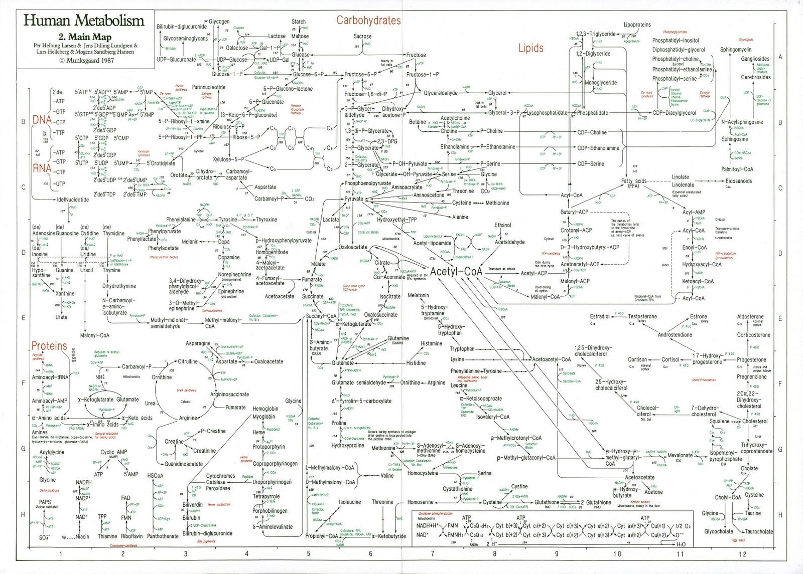 metabolismo procesos catabolicos y anabolicos