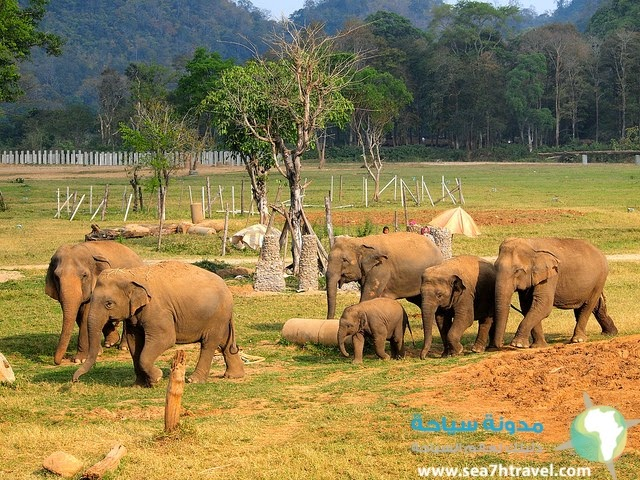 معلومات عن المحمية الطبيعية للفيلة جوكي