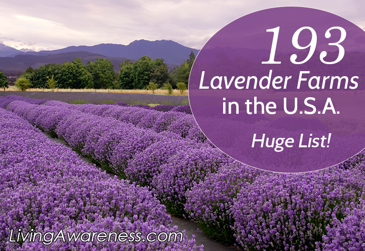 193 Lavender Farms in the USA, shared by Living Awareness