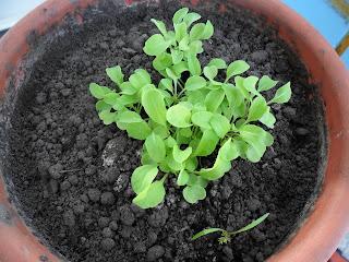 2 марта, салат Рукола