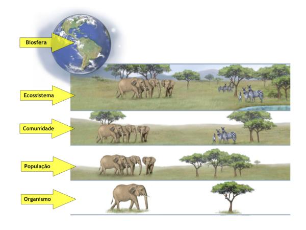 Sistemas Ecológicos