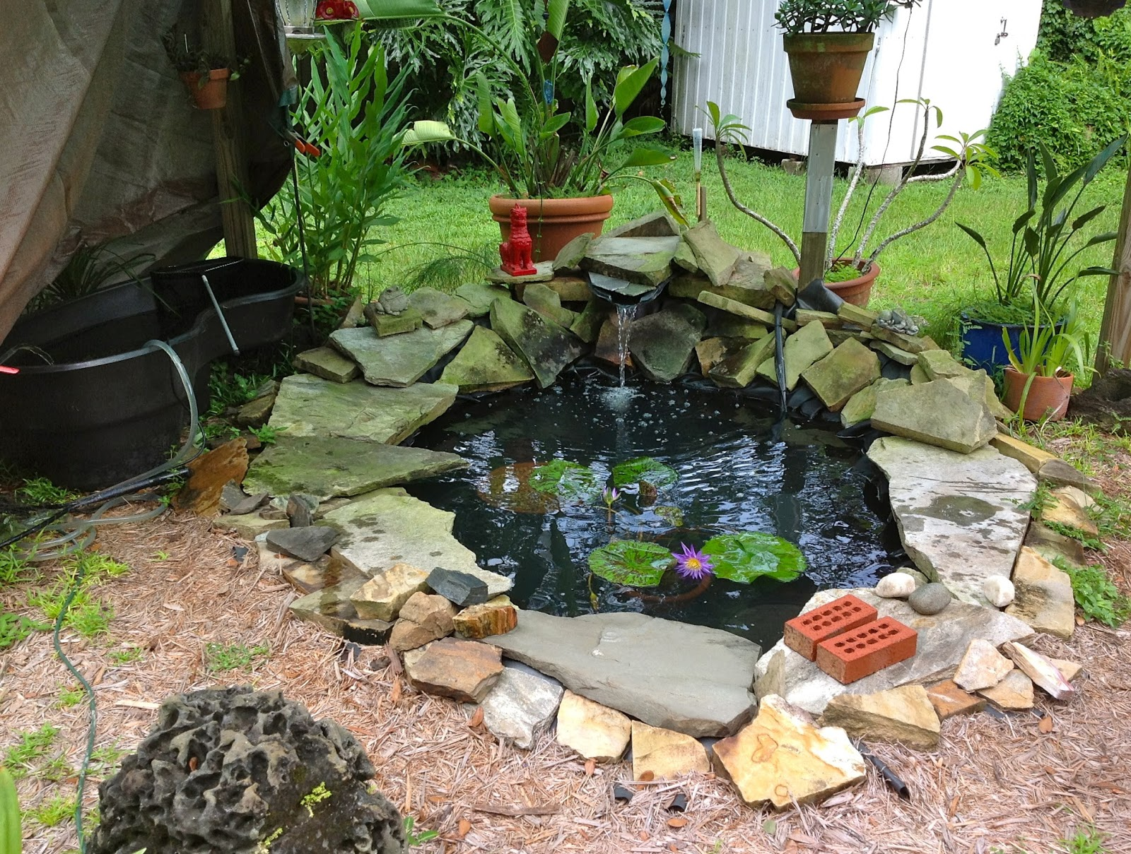 Dragon 39 s orchid garden for Temporary koi pond