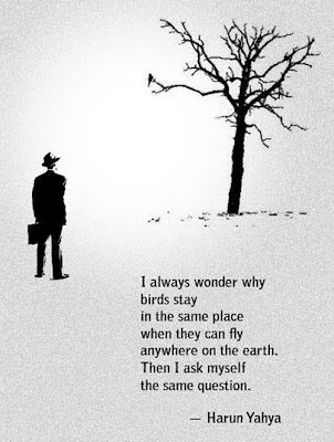 I always wonder why birds stay in the same place  when they can fly anywhere on the earth.  Then I ask myself the same question.  - Harun Yahya