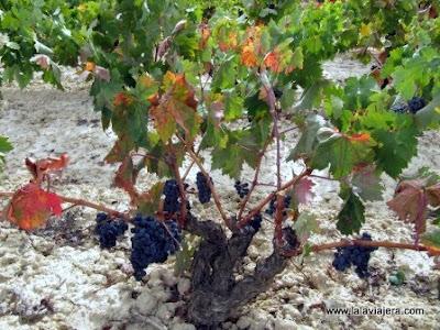 Vinedos Rioja Alavesa