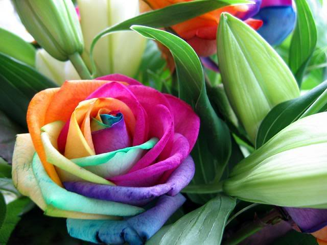 Youre the reason why im like this for What are rainbow roses